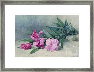 Oleander Blossom Framed Print by Mary E Butler