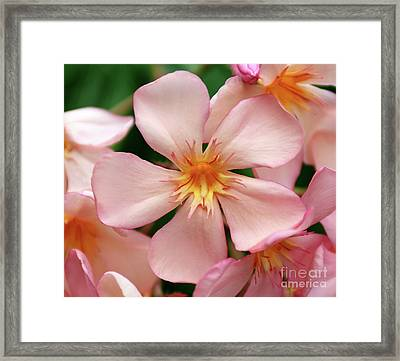 Framed Print featuring the photograph Oleander Dr. Ragioneri 1 by Wilhelm Hufnagl