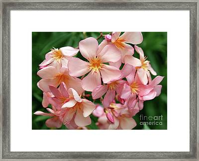 Framed Print featuring the photograph Oleander Dr. Ragioneri 3 by Wilhelm Hufnagl