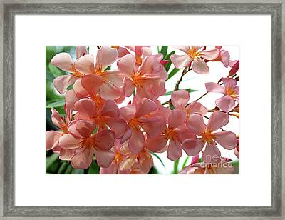 Framed Print featuring the photograph Oleander Dr. Ragioneri 4 by Wilhelm Hufnagl