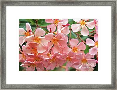 Framed Print featuring the photograph Oleander Dr. Ragioneri 5 by Wilhelm Hufnagl