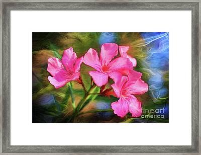 Oleander Dream Framed Print by Deborah Benoit