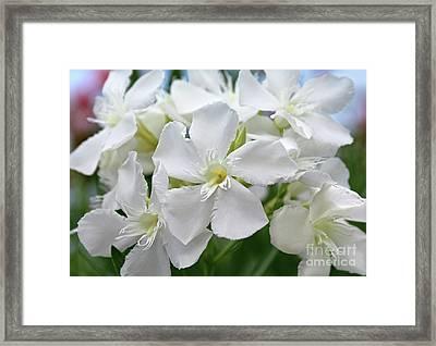Oleander Ed Barr 3 Framed Print