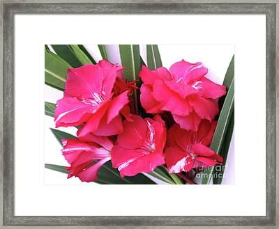 Framed Print featuring the photograph Oleander Geant Des Batailles 1 by Wilhelm Hufnagl