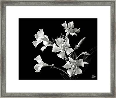 Oleander In Black And White Framed Print by Endre Balogh