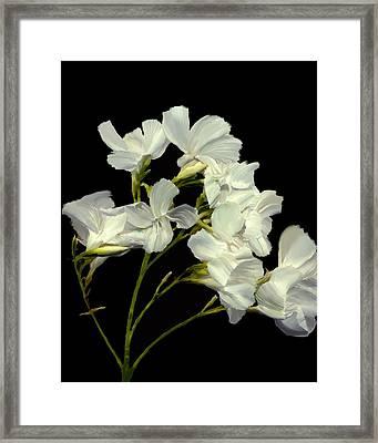 Oleander Framed Print by Kurt Van Wagner