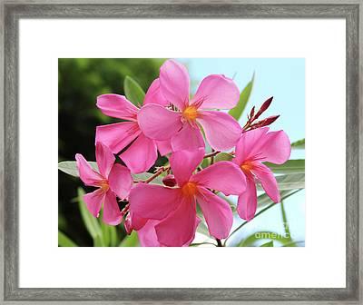 Oleander Maresciallo Graziani 1 Framed Print