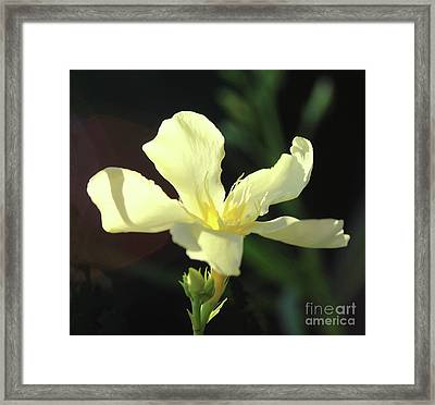 Oleander Marie Gambetta 1 Framed Print