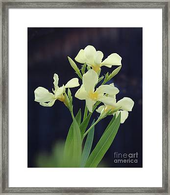 Framed Print featuring the photograph Oleander Marie Gambetta 2 by Wilhelm Hufnagl