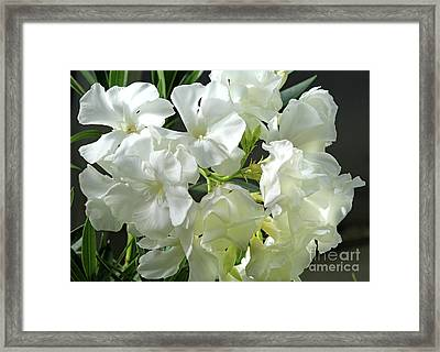 Oleander Mont Blanc 2 Framed Print