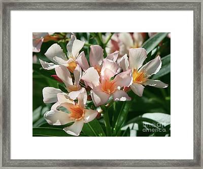 Oleander Petite Salmon 1 Framed Print
