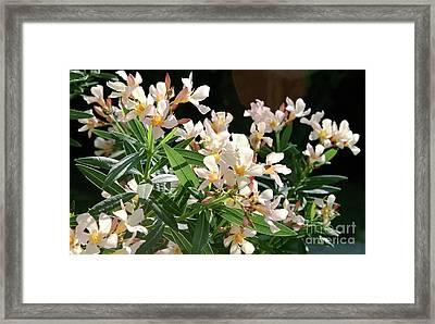 Oleander Petite Salmon 3 Framed Print