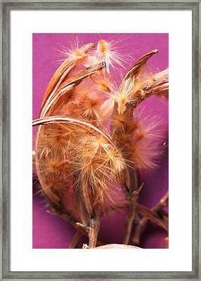 Oleander Seed Pods Framed Print by M Diane Bonaparte