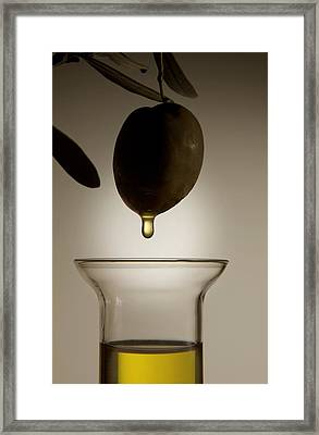Olive And Olive Oil Framed Print by Sheila Terry