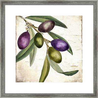 Olive Branch IIi Framed Print by Mindy Sommers