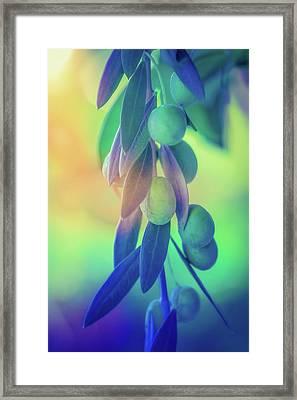 Olive Branch In Color Framed Print