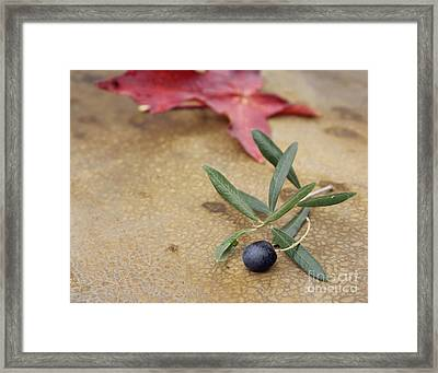 Framed Print featuring the photograph Olive by Cindy Garber Iverson