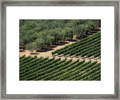 Olive Grove Meets Vineyard Framed Print