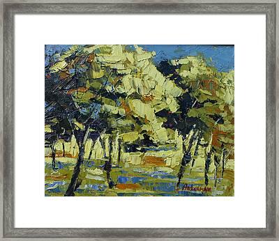 Olive Grove Framed Print by Yvonne Ankerman