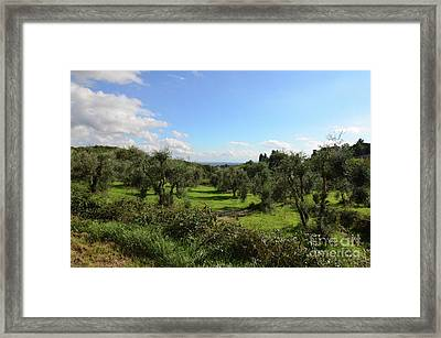 Olive Groves In Tuscany Italy Framed Print by DejaVu Designs