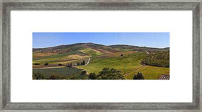 Olive Groves, Malaga Province Framed Print by Panoramic Images
