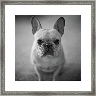 Framed Print featuring the photograph Olive by Lucian Capellaro