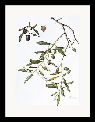 Olive Green Drawings Framed Prints