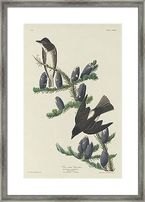 Olive-sided Flycatcher Framed Print