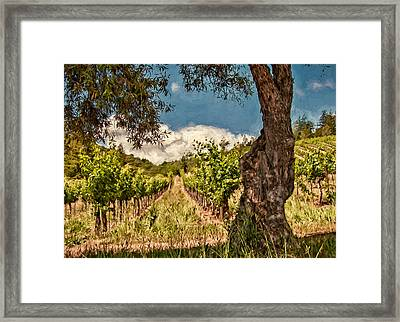 Olive Tree And Vineyard Framed Print by John K Woodruff