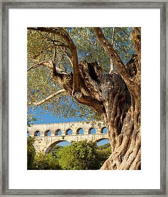 Olive Tree At Pont Du Gard Framed Print