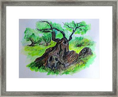 Olive Tree Framed Print by Clyde J Kell