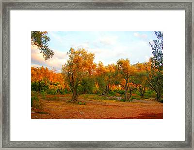 Olive Tree Forest Framed Print