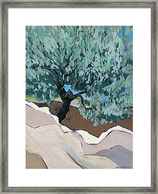 Olive Tree In Crevice Framed Print by Sarah Gillard