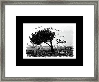 Olive Tree In House Of Elohim Framed Print