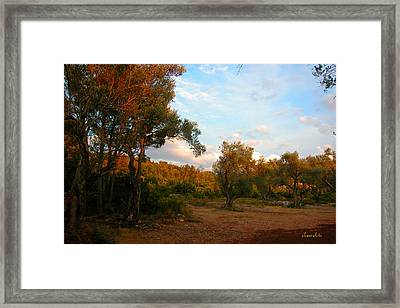 Olive Tree  Framed Print