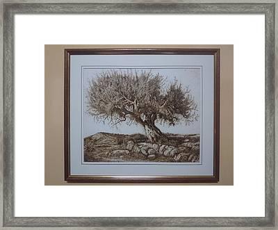 Olive Tree Paper Pyrography Framed Print by Darko Latkovic