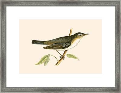 Olive Tree Warbler Framed Print