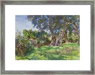 Olive Trees, Corfu Framed Print by John Singer Sargent