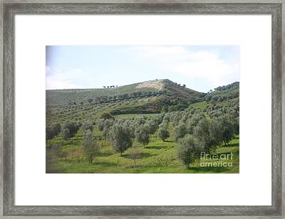 Olive Trees Framed Print by Dennis Curry
