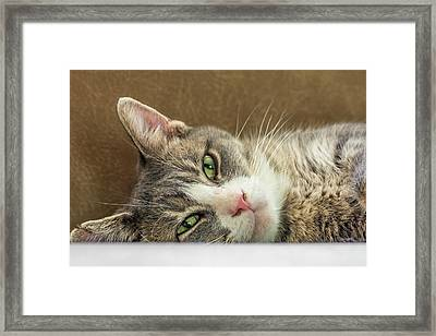 Oliver Framed Print by Irwin Seidman