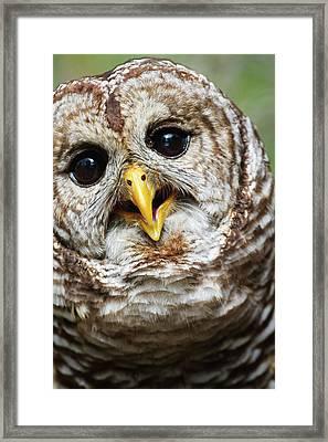 Oliver Owl Framed Print