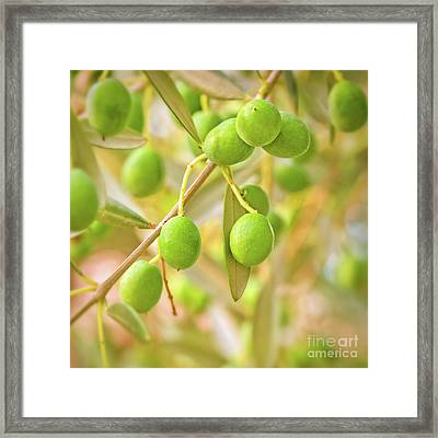 Olives Framed Print