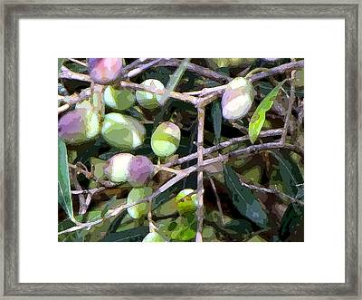 Olives Framed Print by Mindy Newman