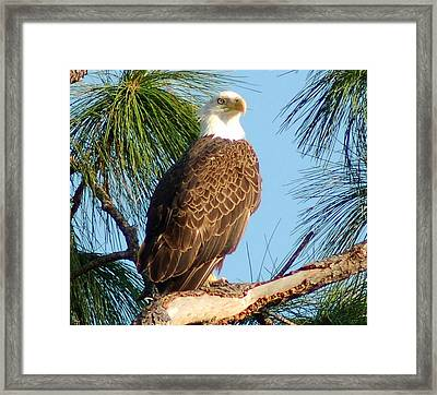 Olympia Street Eagle Framed Print by Sandy Poore