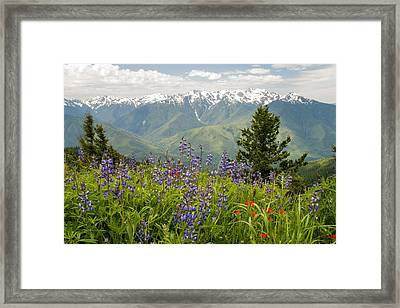 Olympic Mountain Wildflowers Framed Print
