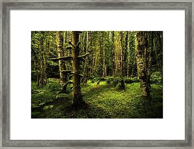 Olympic Rainforest, Washington Framed Print by TL Mair