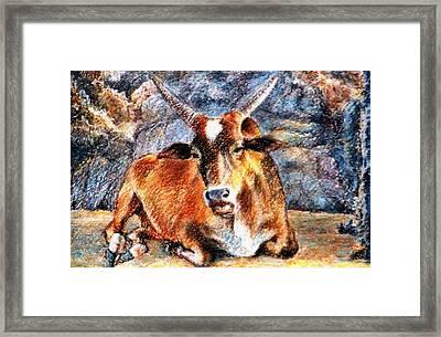 Om Beach Bull Framed Print by Claudio  Fiori