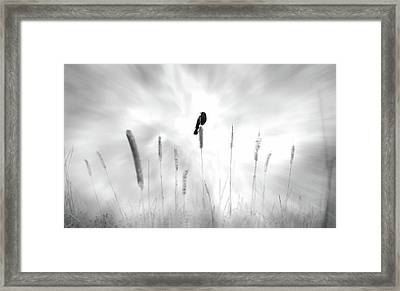 Framed Print featuring the photograph Omen by John Poon