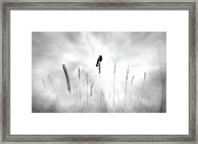 Omen Framed Print by John Poon