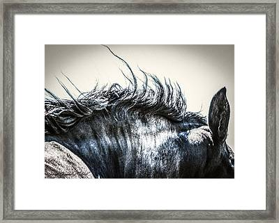 #1240 - Mortana Morgan Mare Framed Print